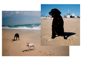 dogs on beach