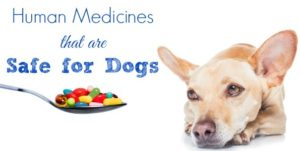 Human-Medicines-Safe-for-Dogs