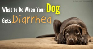 dog-diarrhea-fb
