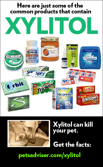 xylitol-products1
