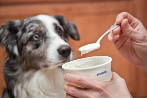 Dog yogurt