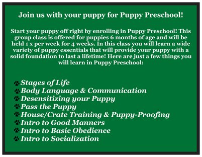 Puppy Preschool Postcard-back
