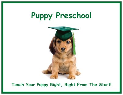 Puppy Preschool Postcard